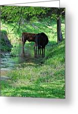 Cooling Spring Greeting Card by Jan Amiss Photography