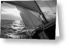 Coquette Sailing Greeting Card by Dustin K Ryan