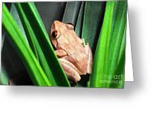 Coqui In Bromeliad Greeting Card by Thomas R Fletcher