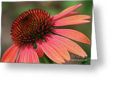 Coral Cone Flower Greeting Card by Sabrina L Ryan