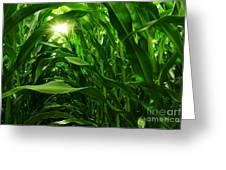 Corn Field Greeting Card by Carlos Caetano