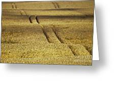 Cornfield Greeting Card by Heiko Koehrer-Wagner