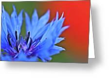 Cornflower Greeting Card by Heiko Koehrer-Wagner