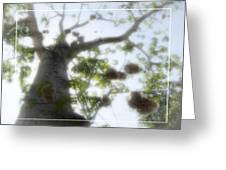 Cotton Ball Tree Greeting Card by Douglas Barnard
