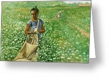 Cotton Field Greeting Card by Robert Casilla
