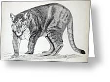 Cougar Greeting Card by Daniel Shuford