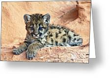 Cougar Kitten Resting Greeting Card by Melody Watson