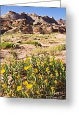 Coyote Buttes Mule's Ear Greeting Card by Greg Clure