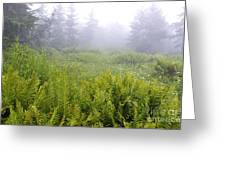 Cranberry Glades Early Morning Greeting Card by Thomas R Fletcher