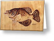 Crappie Greeting Card by Ron Haist