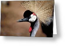 Crested Crane Greeting Card by Carl Purcell