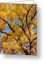 Crisp Autumn Day Greeting Card by James BO  Insogna