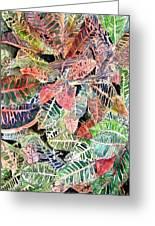 Croton Tropical Art Print Greeting Card by Derek Mccrea