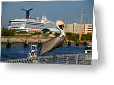 Cruising Pelican Greeting Card by Susanne Van Hulst