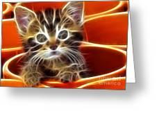 Curious Kitten Greeting Card by Pamela Johnson