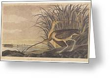 Curlew Greeting Card by John James Audubon