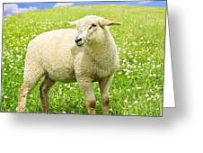 Cute young sheep Greeting Card by Elena Elisseeva