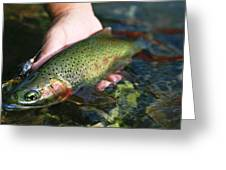 Cutthroat Trout On The Middle Fork Greeting Card by Drew Rush
