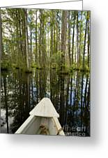 Cypress Garden Swamp Greeting Card by Dustin K Ryan