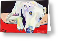 Cyrus Greeting Card by Pat Saunders-White