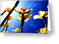 Daffodil Greeting Card by Nathan Grisham