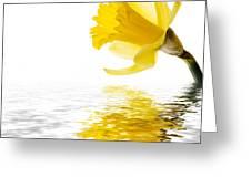 Daffodil reflected Greeting Card by Jane Rix