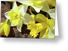 Daffodils Flower Bouquet Rustic Rock Art Daffodil Flowers Artwork Spring Floral Art Greeting Card by Baslee Troutman