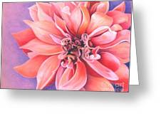 Dahlia 2 Greeting Card by Phyllis Howard