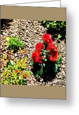 Dahlia Flowers Greeting Card by Corey Ford