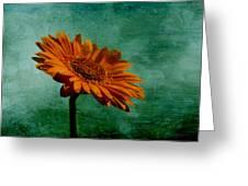 Daisy Daisy Greeting Card by Georgia Fowler
