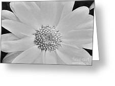 Daisy Doo Greeting Card by Marsha Heiken