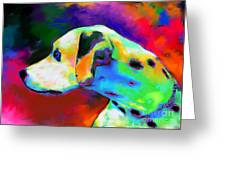 Dalmatian Dog Portrait Greeting Card by Svetlana Novikova