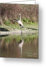 Dancing On The Pond Greeting Card by Carol Groenen