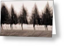 Dancing Pines Greeting Card by Carol Leigh