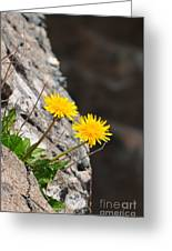 Dandelion Greeting Card by Catherine Reusch  Daley
