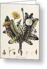 Dandelion Greeting Card by Granger