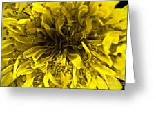 Dandelion Greeting Card by Ryan Kelly