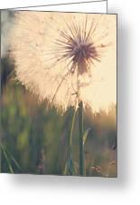 Dandelion Sunshine Greeting Card by Nancy  Coelho
