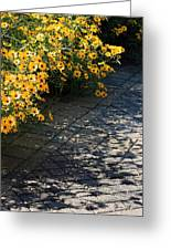 Dappled Light Greeting Card by Suzanne Gaff
