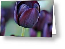 Dark Purple Tulip Greeting Card by Sandy Keeton