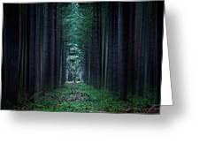 Dark side of Forest Greeting Card by Svetlana Sewell