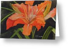 Daylily Study IIi Greeting Card by Jean Blackmer