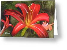 Daylily Study Iv Greeting Card by Jean Blackmer