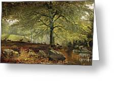 Deer In A Wood Greeting Card by Joseph Adam