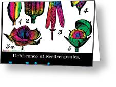 Dehiscence Greeting Card by Eric Edelman
