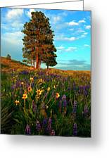 Desert Pines Meadow Greeting Card by Mike  Dawson