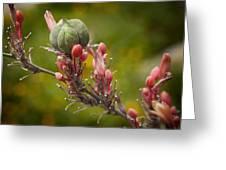 Desert Seed Pod 2 Greeting Card by Kelley King