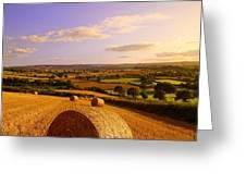 Devon Haybales Greeting Card by Neil Buchan-Grant