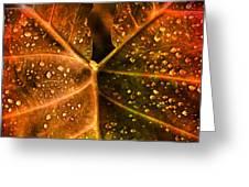 Dew Drops Greeting Card by Susanne Van Hulst