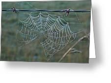 Dew On The Web Greeting Card by Douglas Barnett